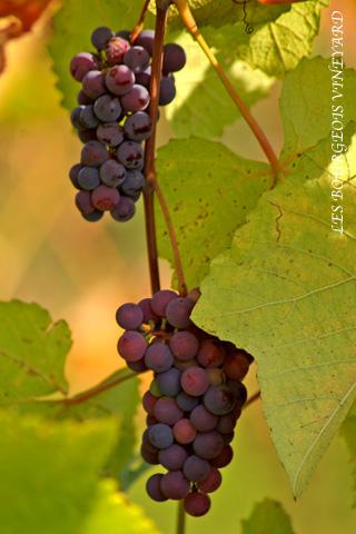 winerie_1.jpg