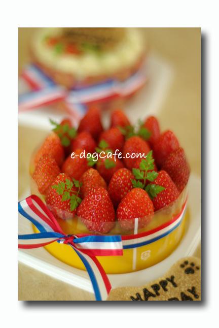 Cake_06.09._1.jpg
