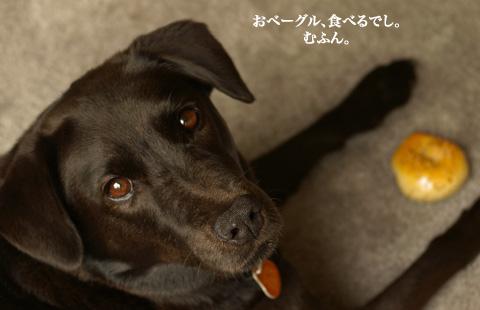 bagle_doggie_2.jpg