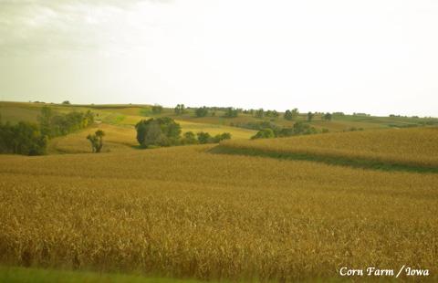 cornfarm_1.jpg