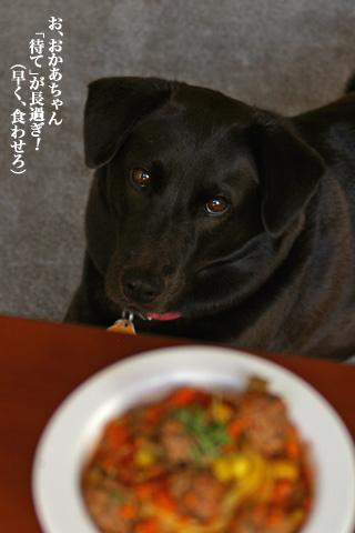 dog_meatballpasta_6.jpg