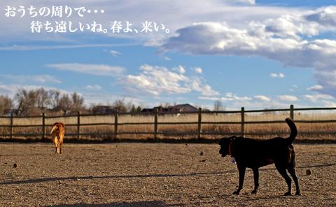 dogpark03.07.06_3.jpg