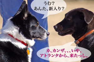dogpark03.07.06_8.jpg