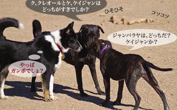 dogpark03.07.06_9.jpg