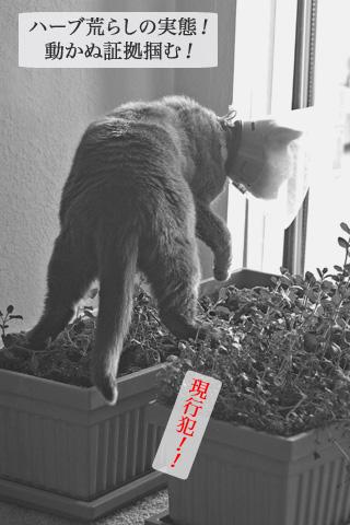 eat_herb6.jpg