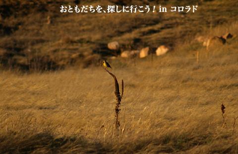 ouchi04.19.06_13.jpg