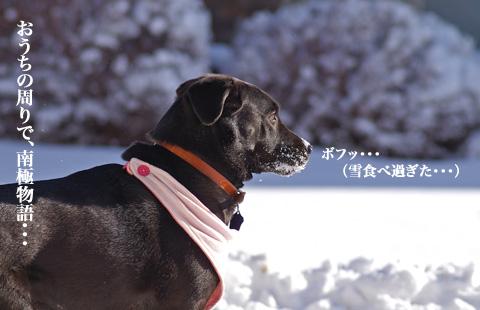 snow_stormy7.jpg