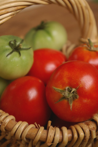 tomato_2005_1.jpg